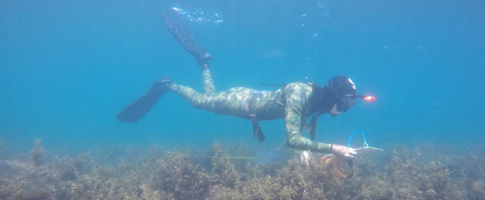 Spring Break Diving in Mexico